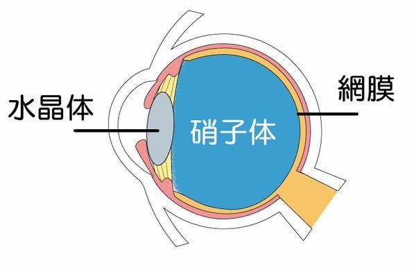 眼の構造【硝子体】