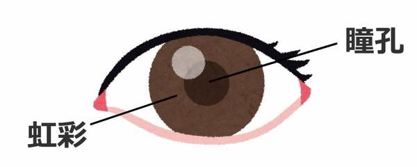 瞳孔と虹彩