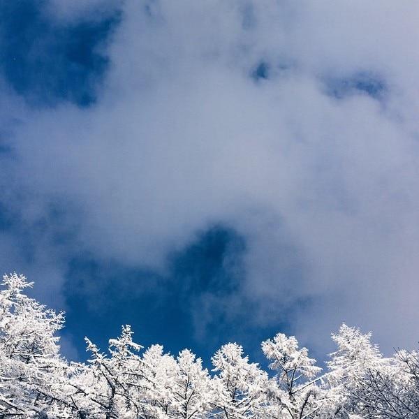 乗鞍高原 霧氷と空のコントラストは冬ならではの美しさ