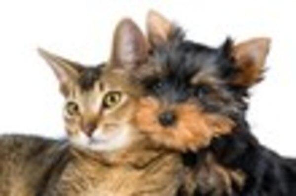 愛犬愛猫たちの動物供養