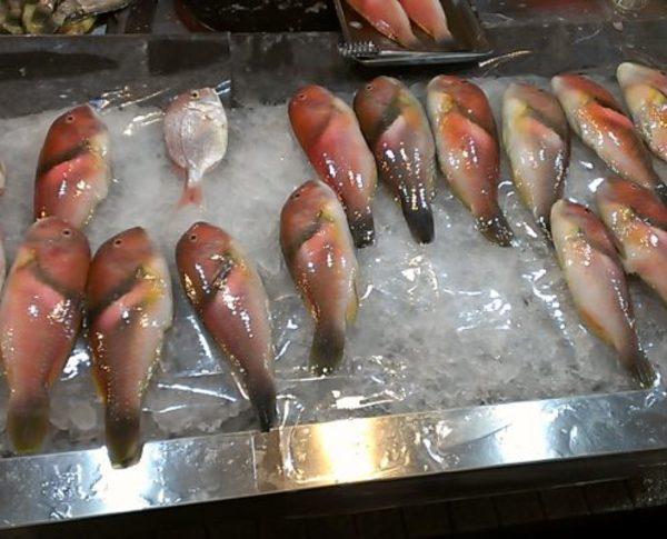 東京すしアカデミー 魚