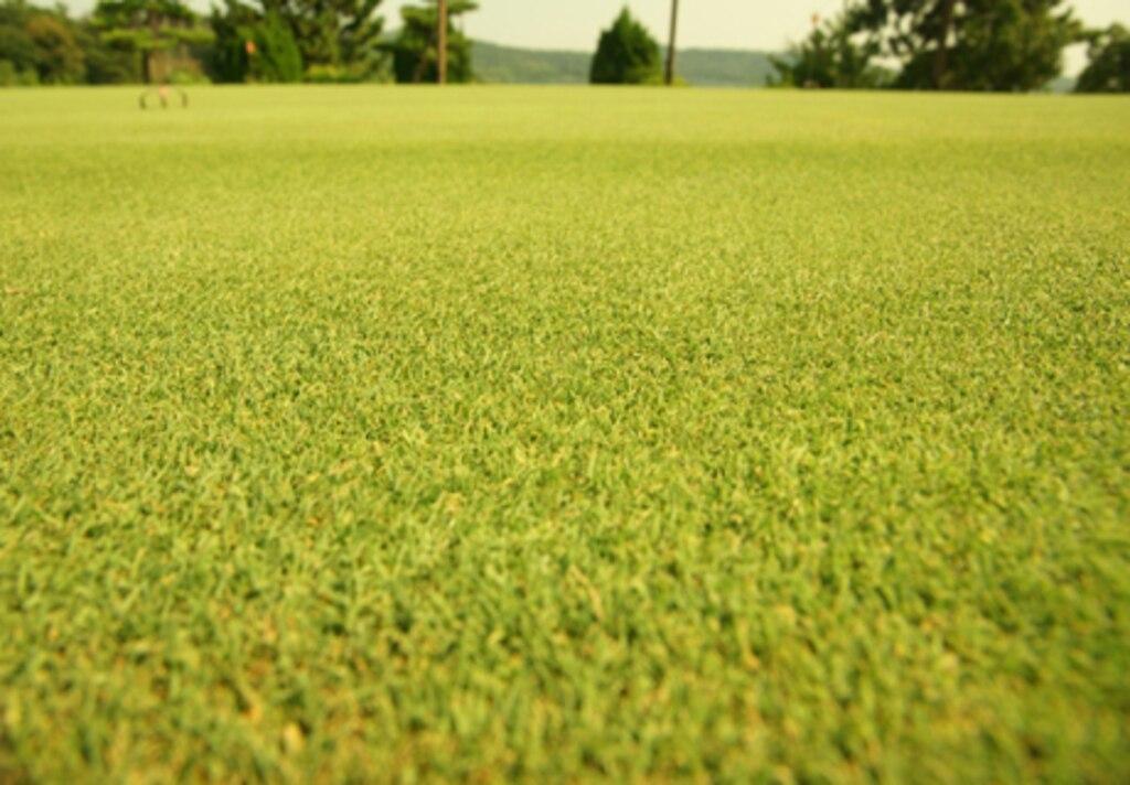イーグルビュー 芝生の見え方