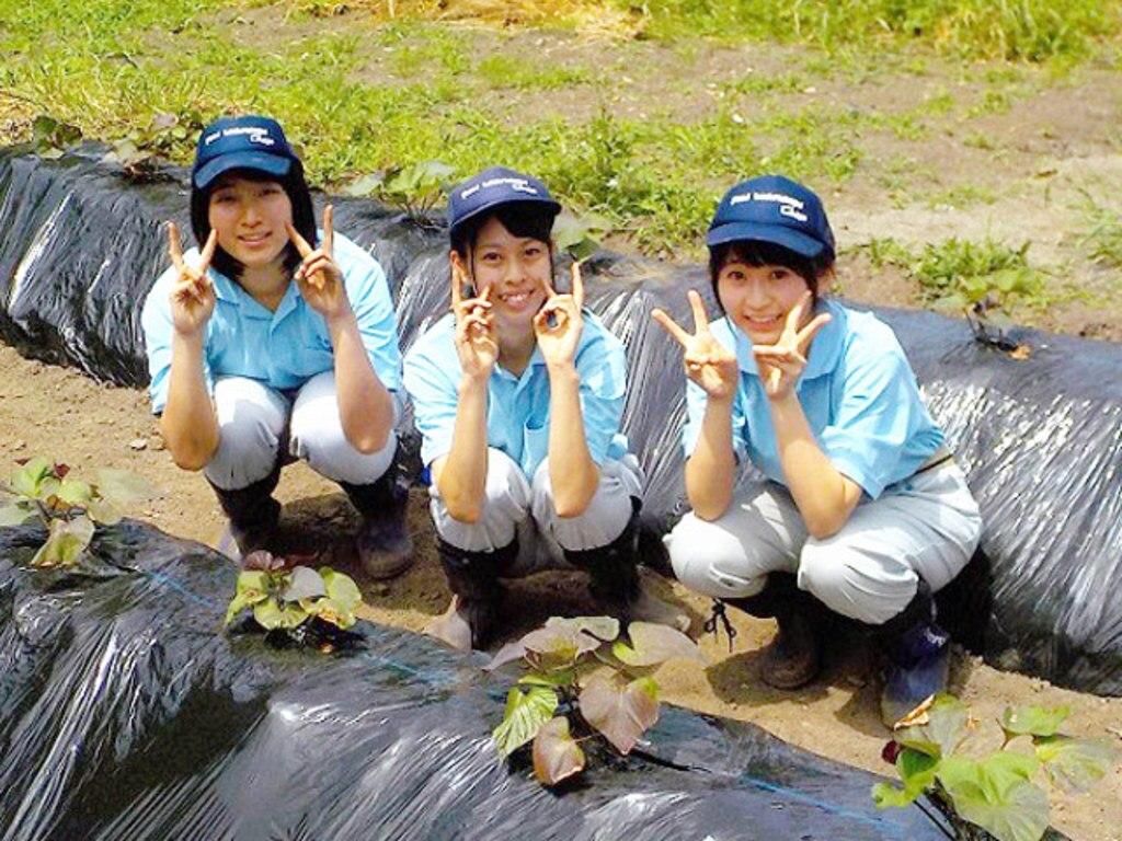 MIHARAS設置先:岐阜県立郡上高等学校 安納芋新ブランドプロジェクト