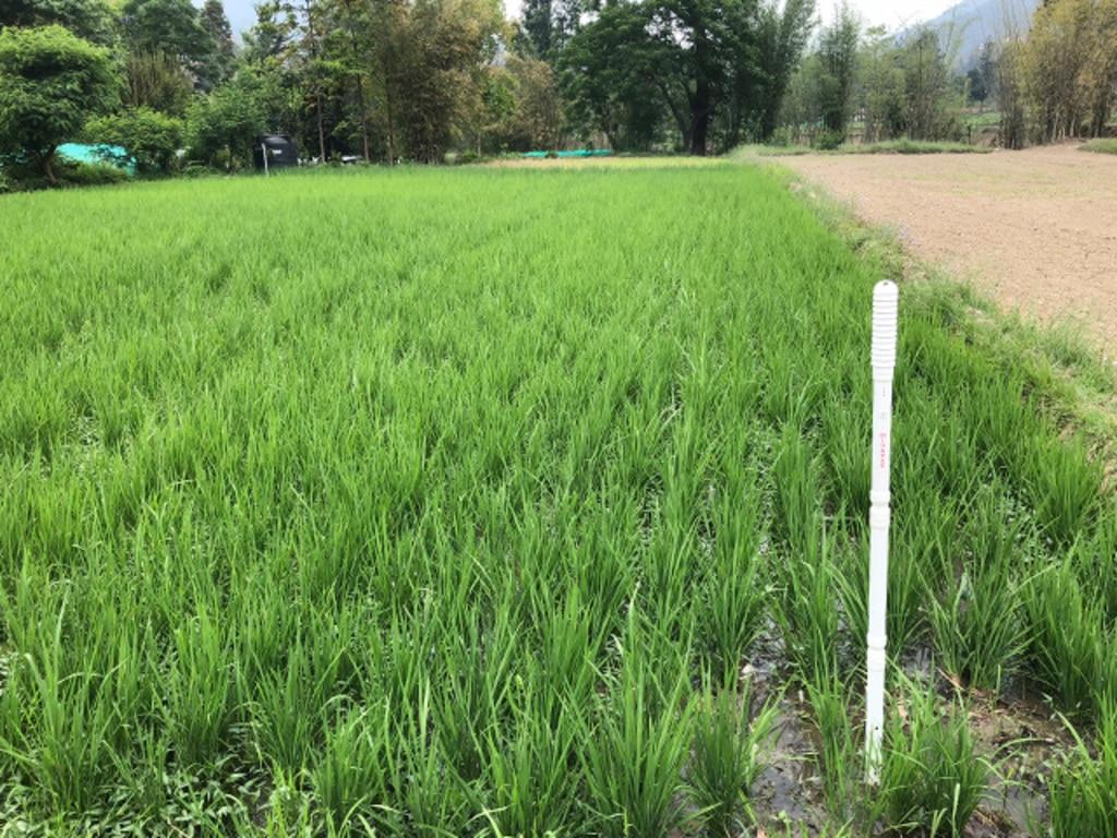 MIHARAS設置先:ブータン王国 水田センサー設置