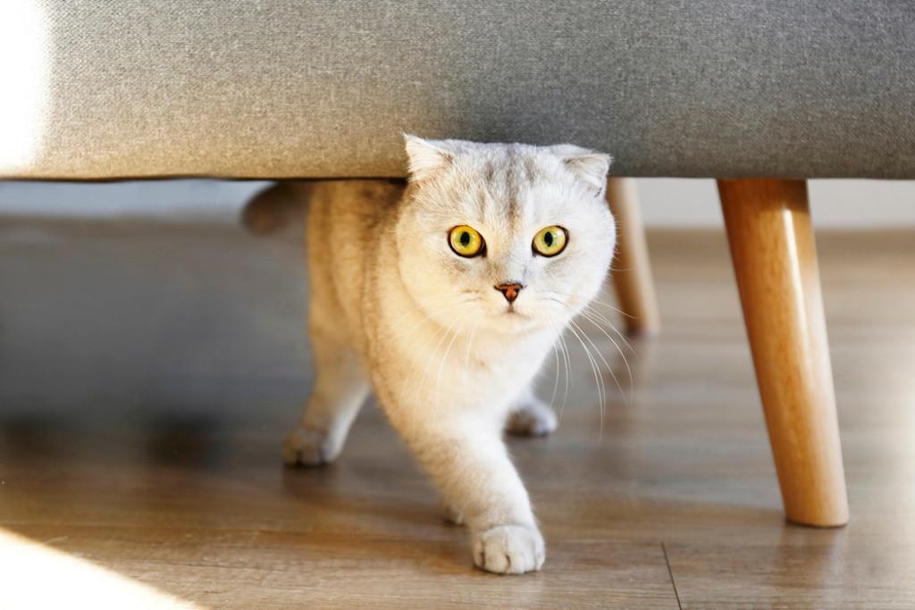 猫 の 飼い 方 初心者