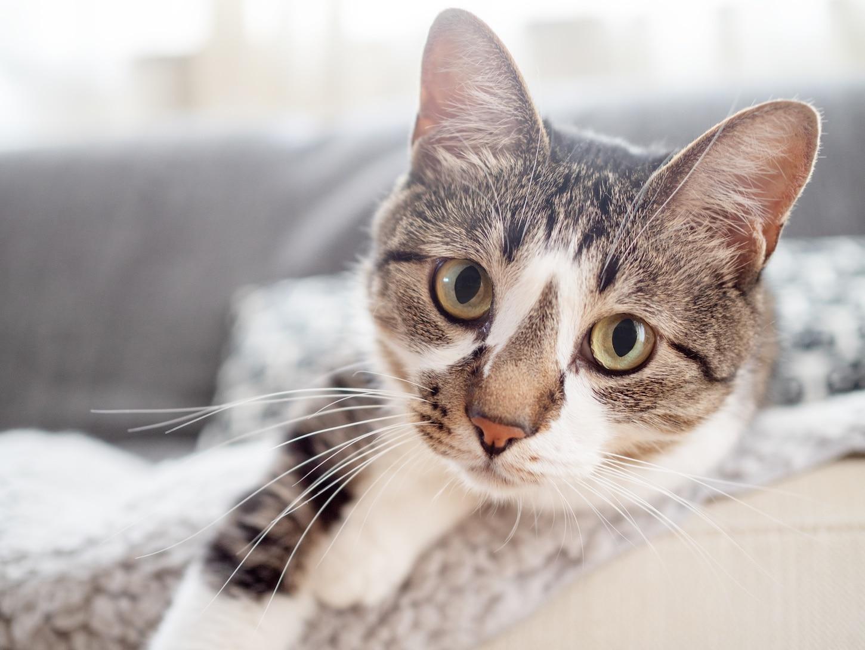 しっぽ パタパタ 猫