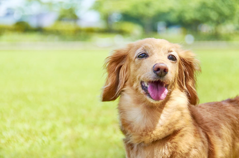 ペット 臭く ない